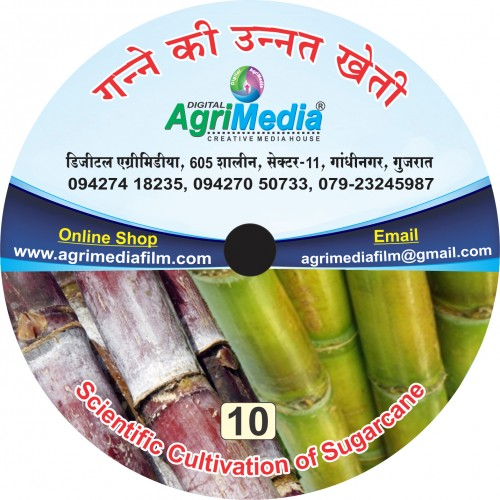 Ganne ki unnat kheti (Scientific cultivation of Sugarcane)