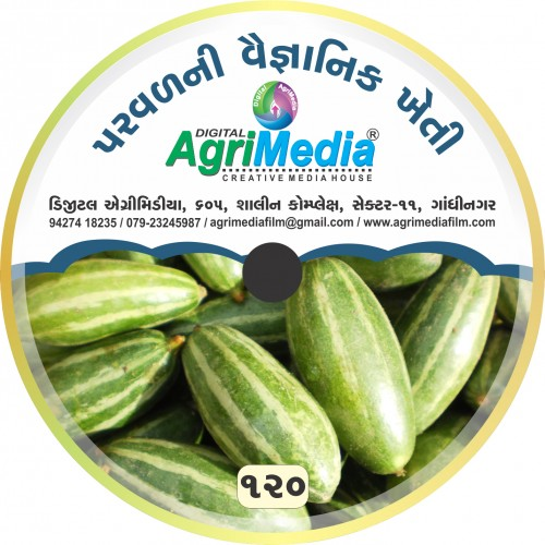 Parval ni Vaiganik Kheti (Scientific Cultivation of Pointed gourd)