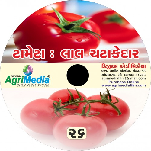 Tameta : Lal Chattakedar (Scientific cultivation of Tomato)