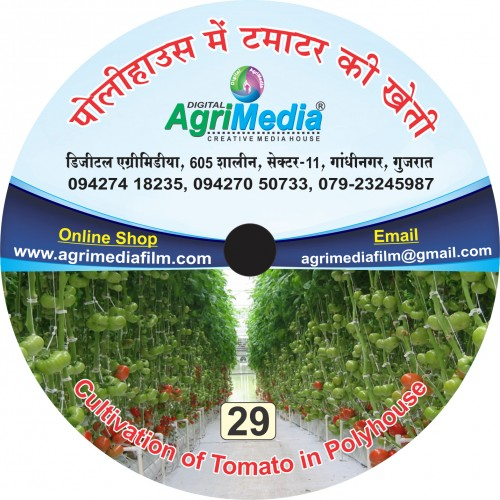 Poly house me tamatar ki vaiganik Kheti (Scientific cultivation of tomato in green house)