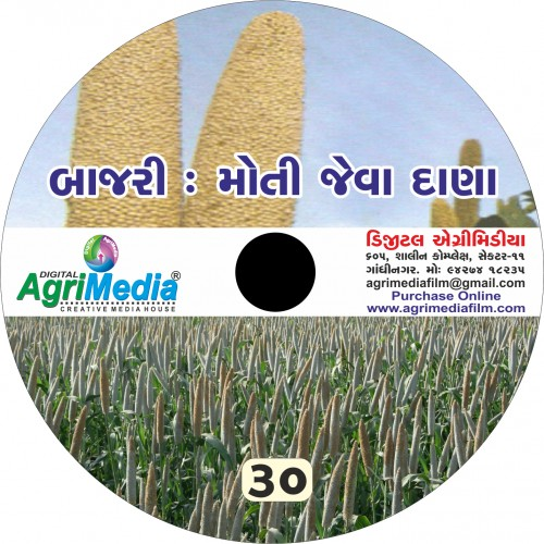 Bajri : Moti jeva dana (Scientific cultivation of Bajara / Pearl millet)