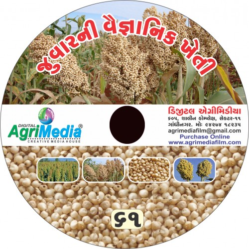 Jowar ni Vaiganik Kheti (Scientific cultivation of Sorghum)