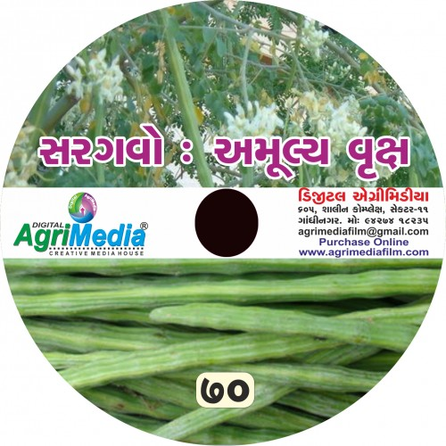 Saragvo : Amulay Vruksh (Scientific cultivation of Drumstick)