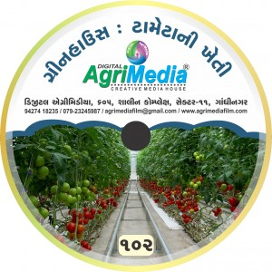 Green house ma tameta ni vaiganik kheti (Scientific cultivation of tomato in green house)