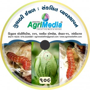 Gulabi iyad(Integrated Management of Pink boll worm)
