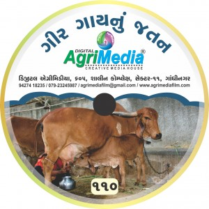 Gir gay nu savrdhan ane Jatan (Gir cow : Breeding and  Care)