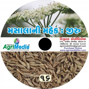 Jiru : Masala ni mahek (Scientific cultivation of Cumin)