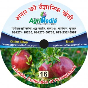 Annar ki vaiganik kheti(Scientific cultivation of Pomegranate)