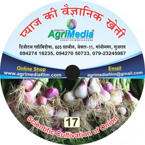 Payas ki vaiganik kheti(Scientific cultivation of Onion)