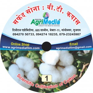Safed Sona : B.T. Kapas (Scientific cultivation of B.T. Cotton)