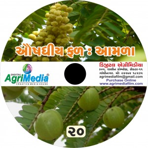 Amla : Auvshdhiya phal (Scientific cultivation of Anola)
