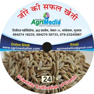 jeere ki safal kheti (Scientific cultivation of Cumin)