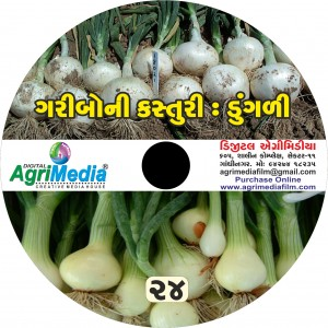 Dungli : Kasturi (Scientific cultivation of Onion)