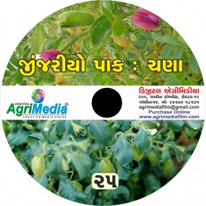 Chana : Zinjariyo Pak (Scientific cultivation of Gram /  Chick Pea)