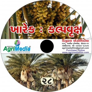 Kharek : Kalpvruksh (Scientific cultivation of Date palm)