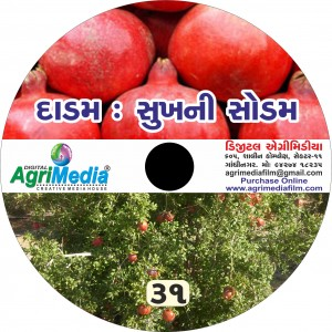 Dadam : Sukh ni Sodam (Scientific cultivation of Pomegranate)