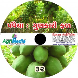 Papaya : Gunkari Phal (Scientific cultivation of Papaya)