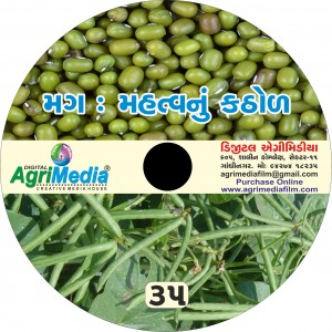 Mag : Mahtvanu Kathol (Scientific cultivation of Green gram)