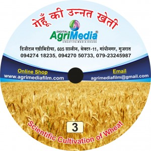 Gehu ki unnat Kheti (Scientific cultivation of Wheat)