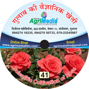 gulab ki vaiganik kheti (scientific cultivation of rose)