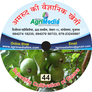 Amrud ki vaiganik kheti (Scientific cultivation of Guava)