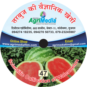 Tarbuj ki vaiganik kheti (Scientific cultivation of Water melon)