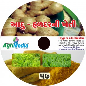 Adu  ni Kheti (Scientific cultivation of Ginger)