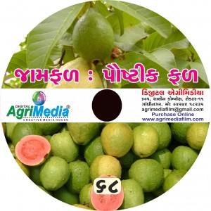 Jamphal : Paustik Phal(Scientific cultivation of Guava)