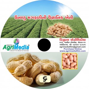 Unadu magfali ni kheti (Scientific cultiavation of summer Groundnut)