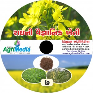 Rai ni Vaiganik Kheti (Scientific cultivation of Mustard)