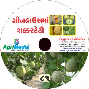 Sakkar teti : Green house (Scientific cultivation of Sweet melon in green house)