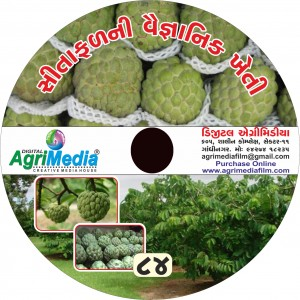 Sitaphal ni Kheti (Scientific cultivation of Custard apple)