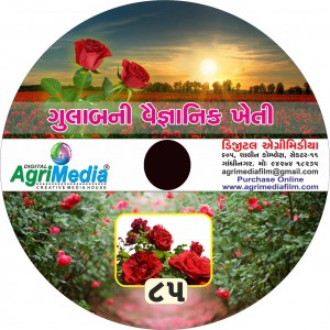 Gulab ni Kheti (Scientific cultivation of Rose)