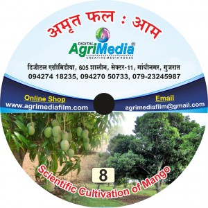 Amrut Phal : Aam(Scientific cultivation of Mango)