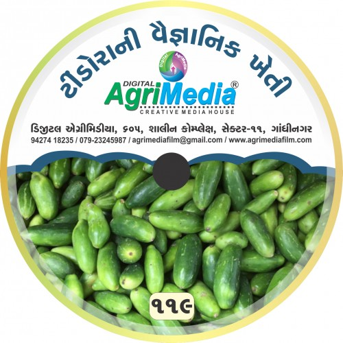 Tindora ni Vaiganik Kheti (Scientific Cultivation of ivy gourd)