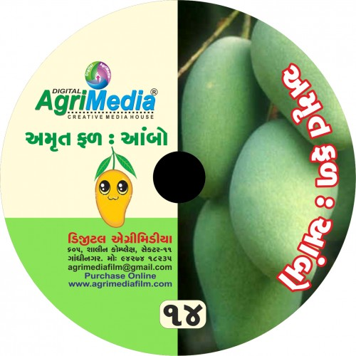 Ambo : Amrut Phal (Scientific cultivation of Mango)