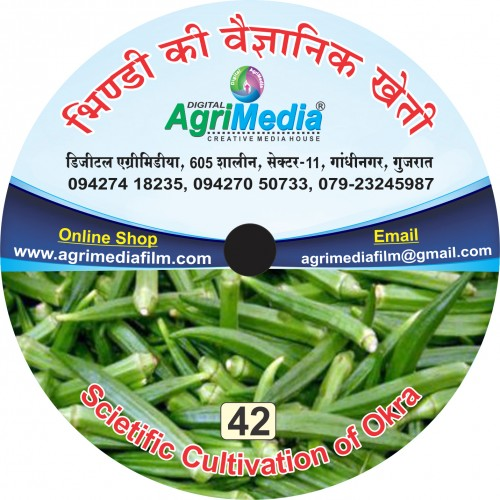 Bhindi ki vaiganik kheti (Scientific cultivation of Okra)